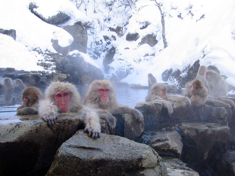 Beppu monkey Источники Беппу (Beppu)