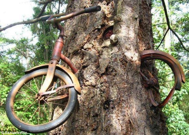 Дерево, съевшее велосипед (Bicycle-Eating Tree)