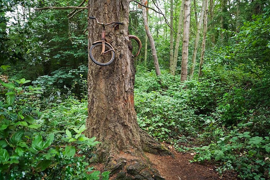 Vashon 3 Дерево, съевшее велосипед (Bicycle Eating Tree)