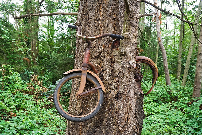 Vashon Дерево, съевшее велосипед (Bicycle Eating Tree)
