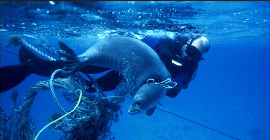 Призрак рыболовства Большое тихоокеанское мусорное пятно