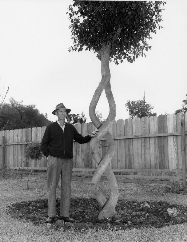 Загадочные арбоскульптуры Акселя Эрландсона